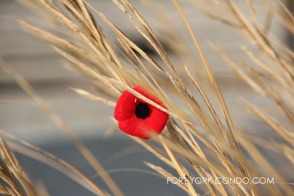 remembrance day poppy in the wheat stand at coronation park